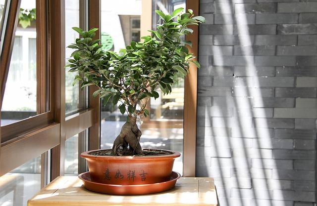 Piękne nietypowe rośliny